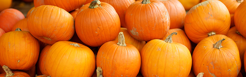 image of pumpkins